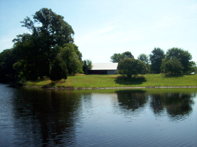 Pastoral Pond View